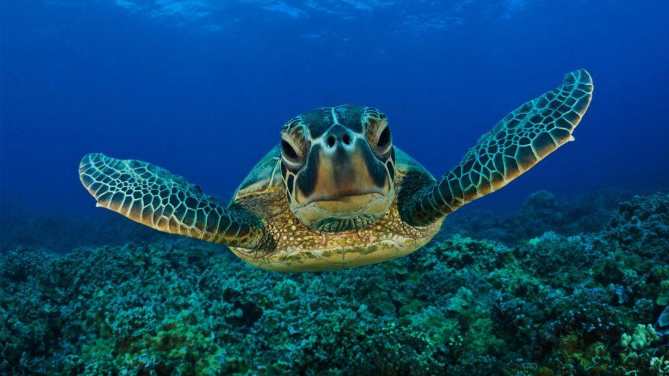 Salvare una tartaruga marina? Ai pescatori di Porto Cesareo varrà un premio di 100€
