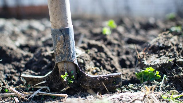 """""""Io Coltivo Italia"""" promuove il ritorno alla terra 4.0. Sarà possibile adottare lotti di terreno e ricevere a casa prodotti BIO 100%"""