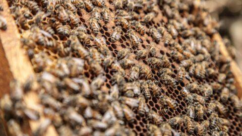 Un milione di firme per le api e un'agricoltura sostenibile